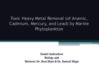 Toxic heavy metal removal (of arsenic, cadmium, lead, and mercury) by marine phytoplankton