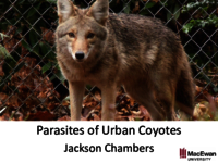 Parasites of urban coyotes