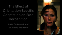 Effect of orientation-specific adaptation on face perception