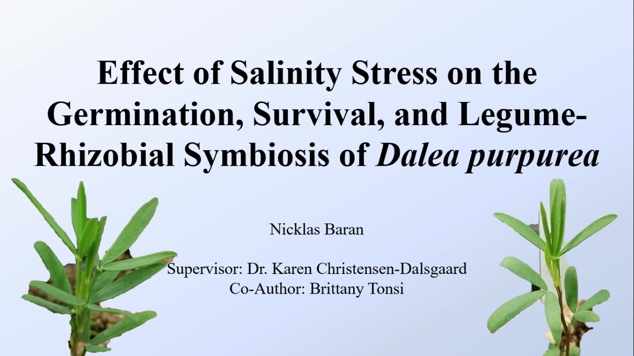 Effects of salinity stress on the germination, survival, and legume-rhizobial symbiosis of native legume Dalea purpurea