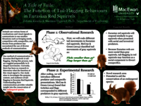 A tale of tails: the function of tail-flagging behaviours in Eurasian red squirrels